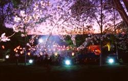 三笠山夜桜まつり