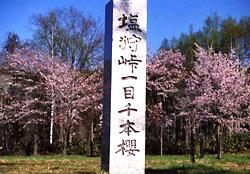 塩狩峠一目千本桜